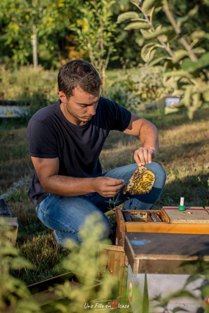 Raphaël LEHR Apiculteur et éleveur d'abeille Ruchers des Vosges du Nord en Alsace