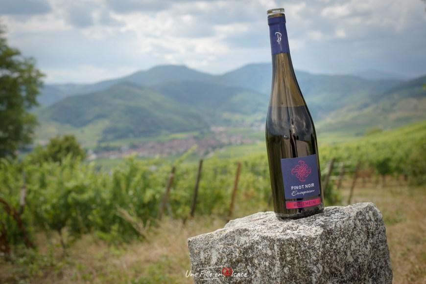Pinot Noir Exception Bestheim@Céline-Schnell-Une-Fille-En-Alsace-2020