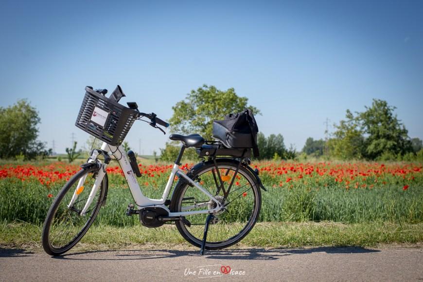 A vélo dans le Grand Ried - Une Fille en Alsace
