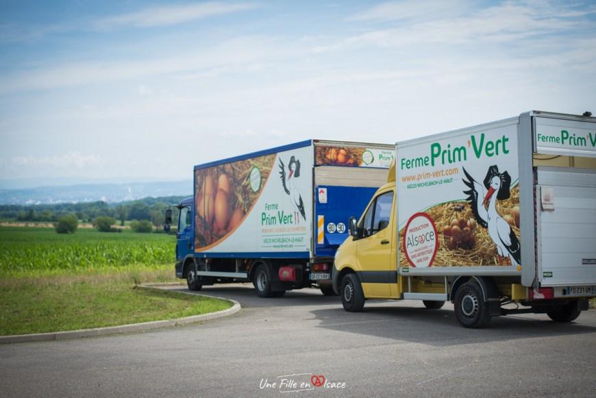 ferme-primvert-Celine-Schnell-Une-Fille-En-Alsace-2021