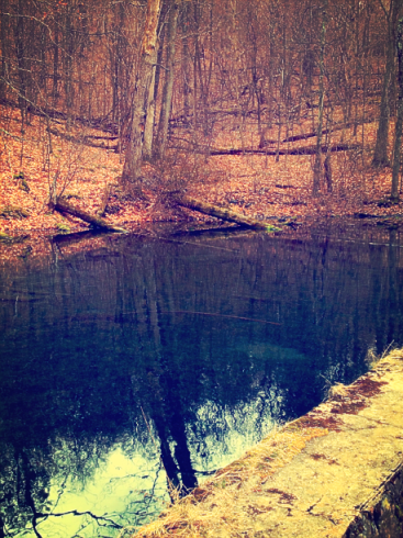pond in woods