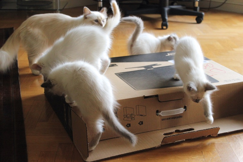 chats-ecran
