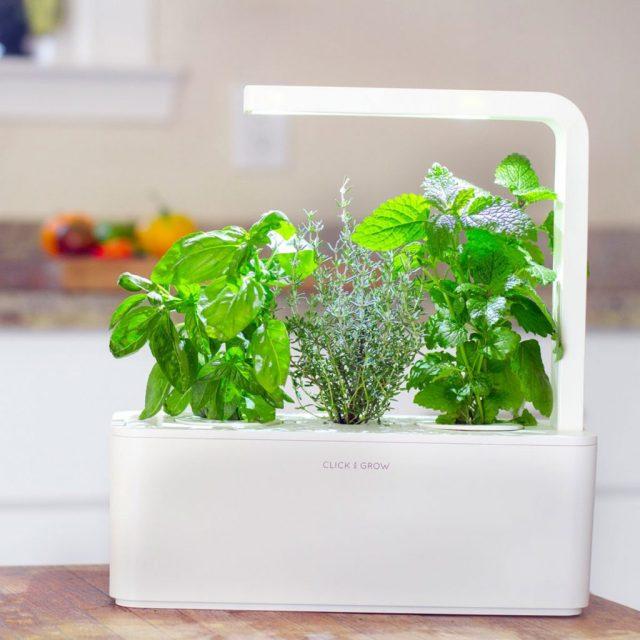 kraeutergarten_click_and_grow_1_1