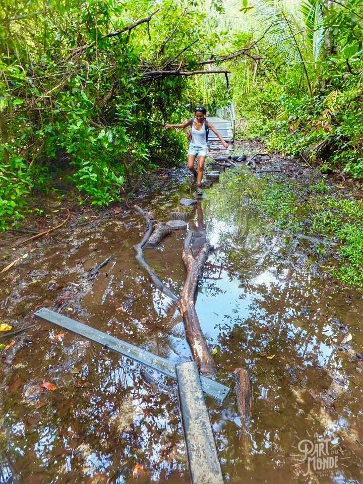 cahuita parc national boue