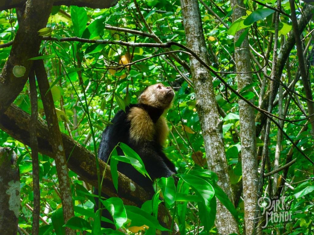 cahuita parc national singe foret