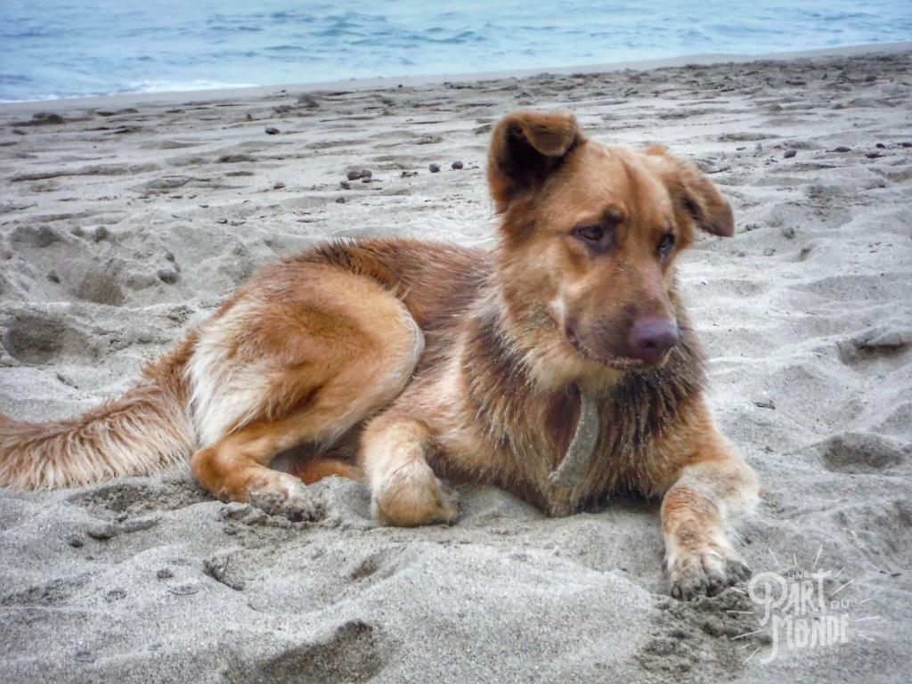 puerto viejo chien plage
