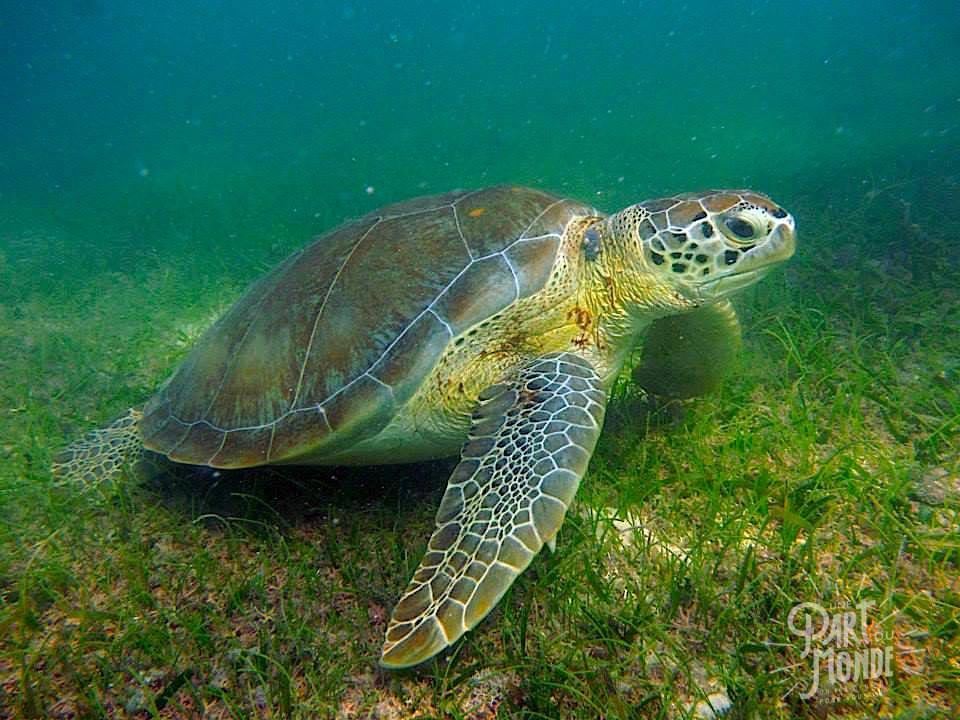 bucket list nager avec tortue mexique