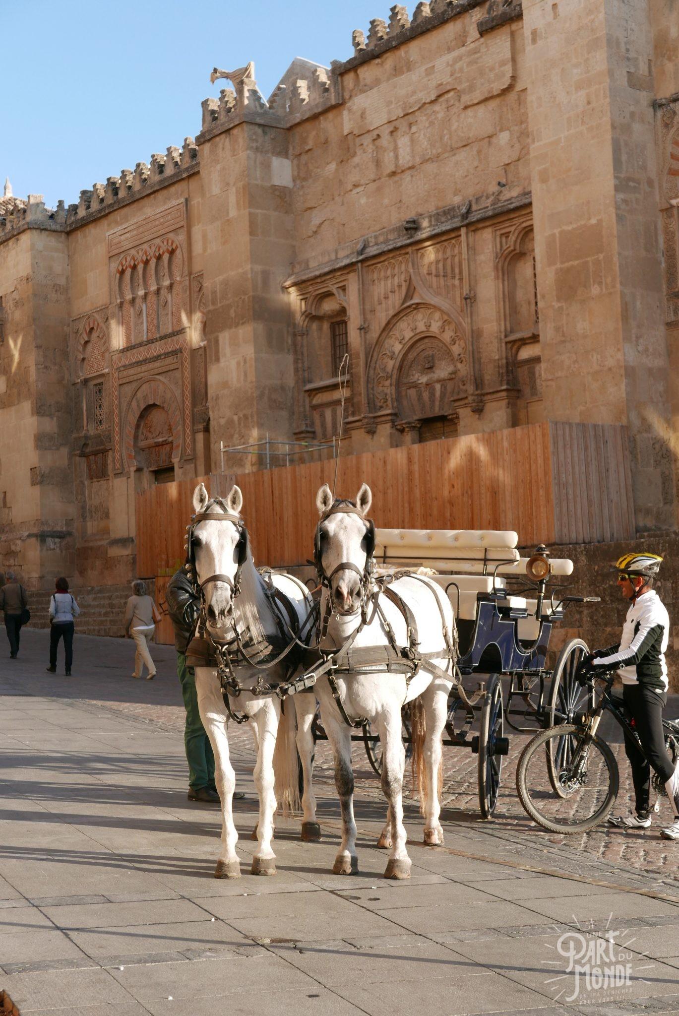 chevaux devant la mezquita de cordoue