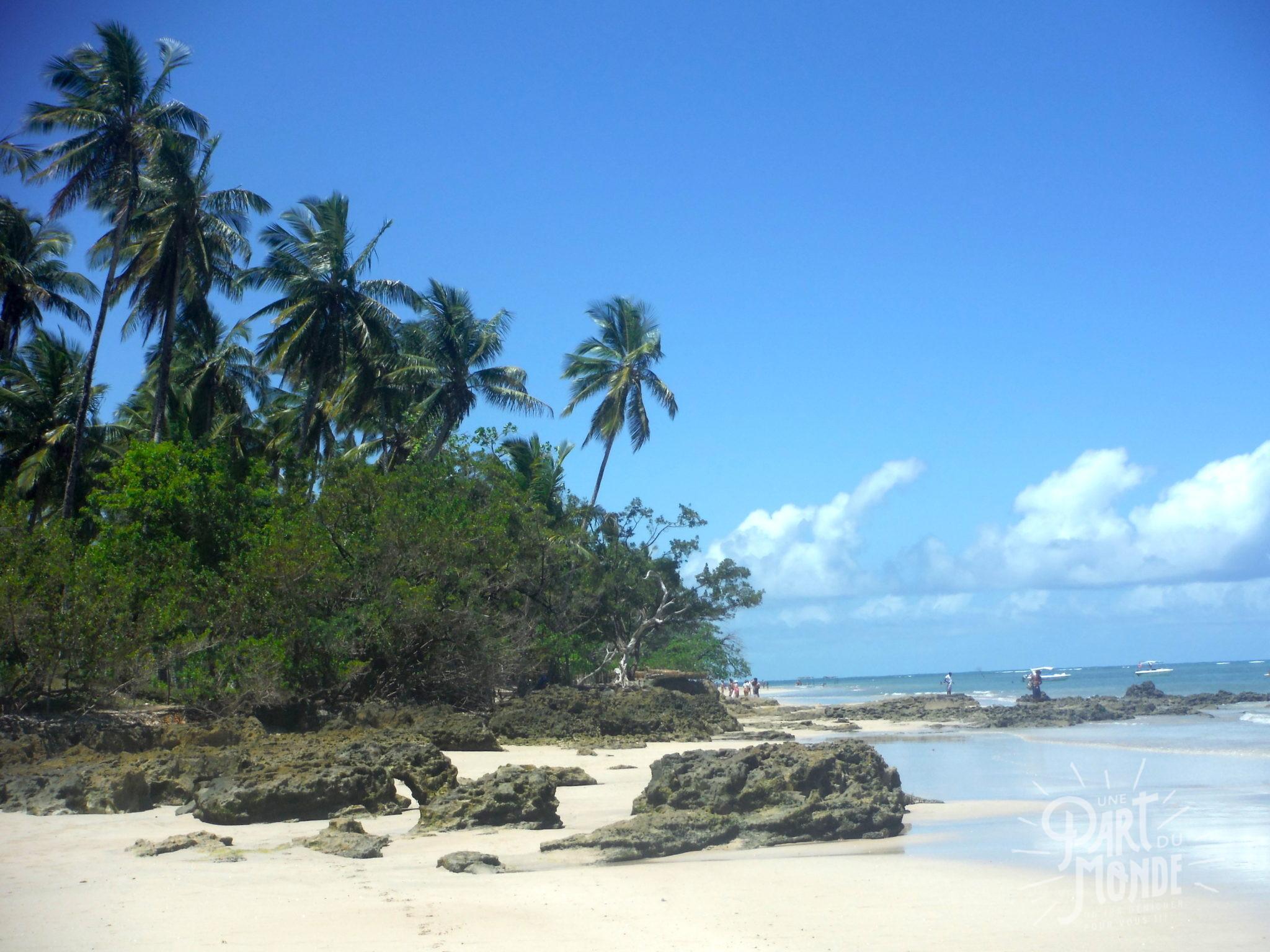île de tinharé plage boipeba palmier