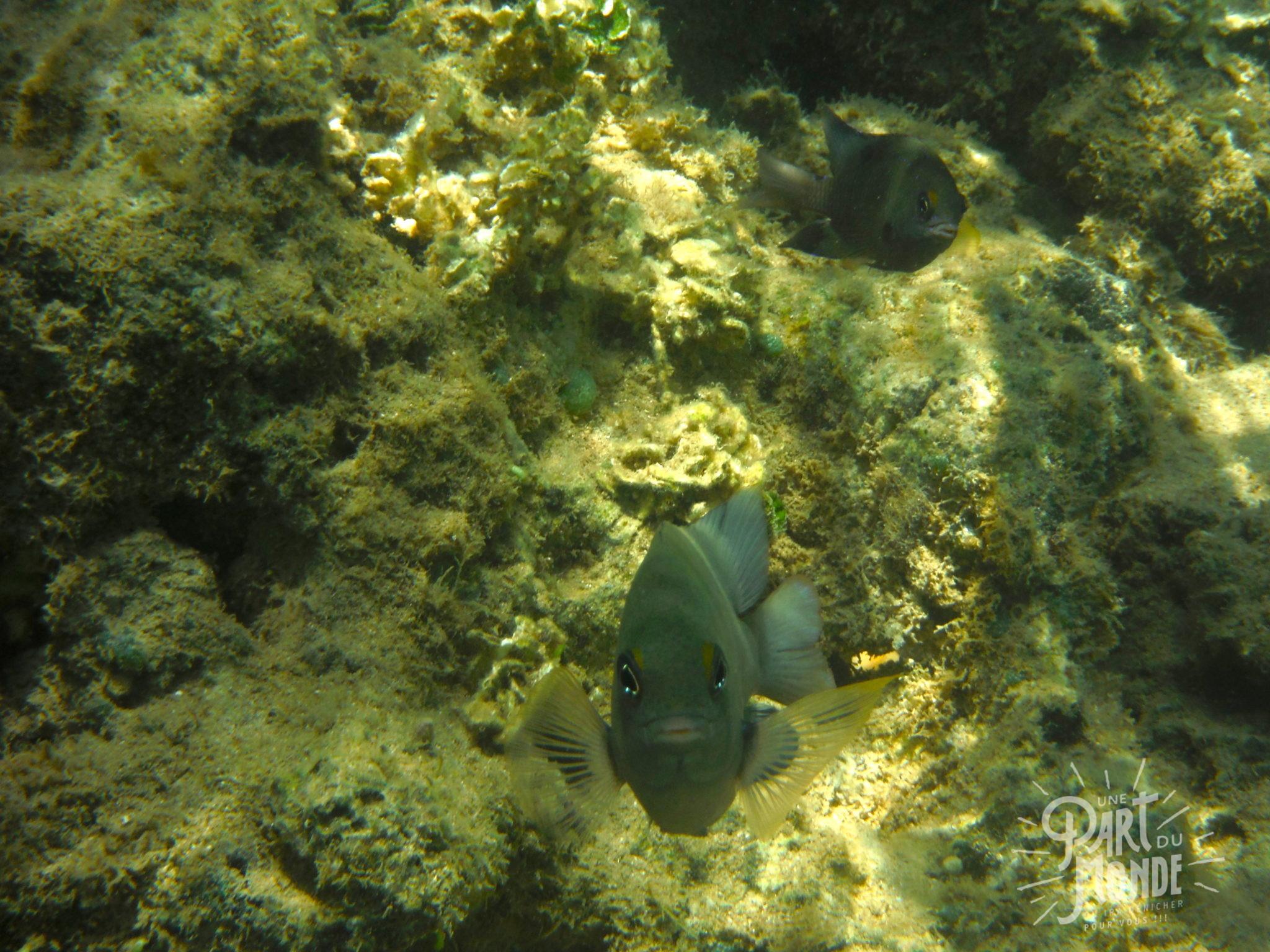 île de tinharé snorkeling