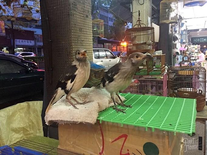 marché aux oiseaux taipei