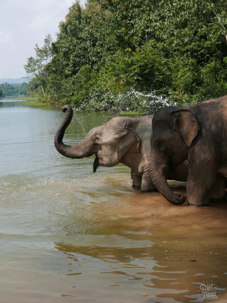 bain 3 elephant conservation center