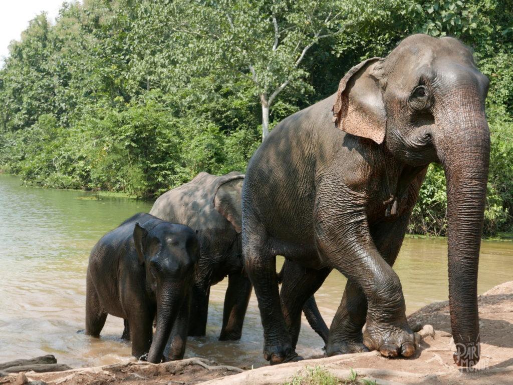bain elephant conservation center