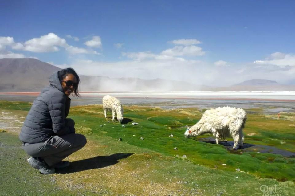 Bolivie : Le Salar d'Uyuni et Sud Lipez