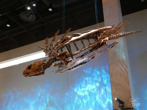 perot museum tortue dallas
