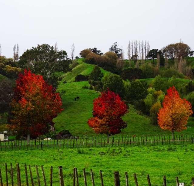 Landscape-picture-green-autumn-New-Zealand