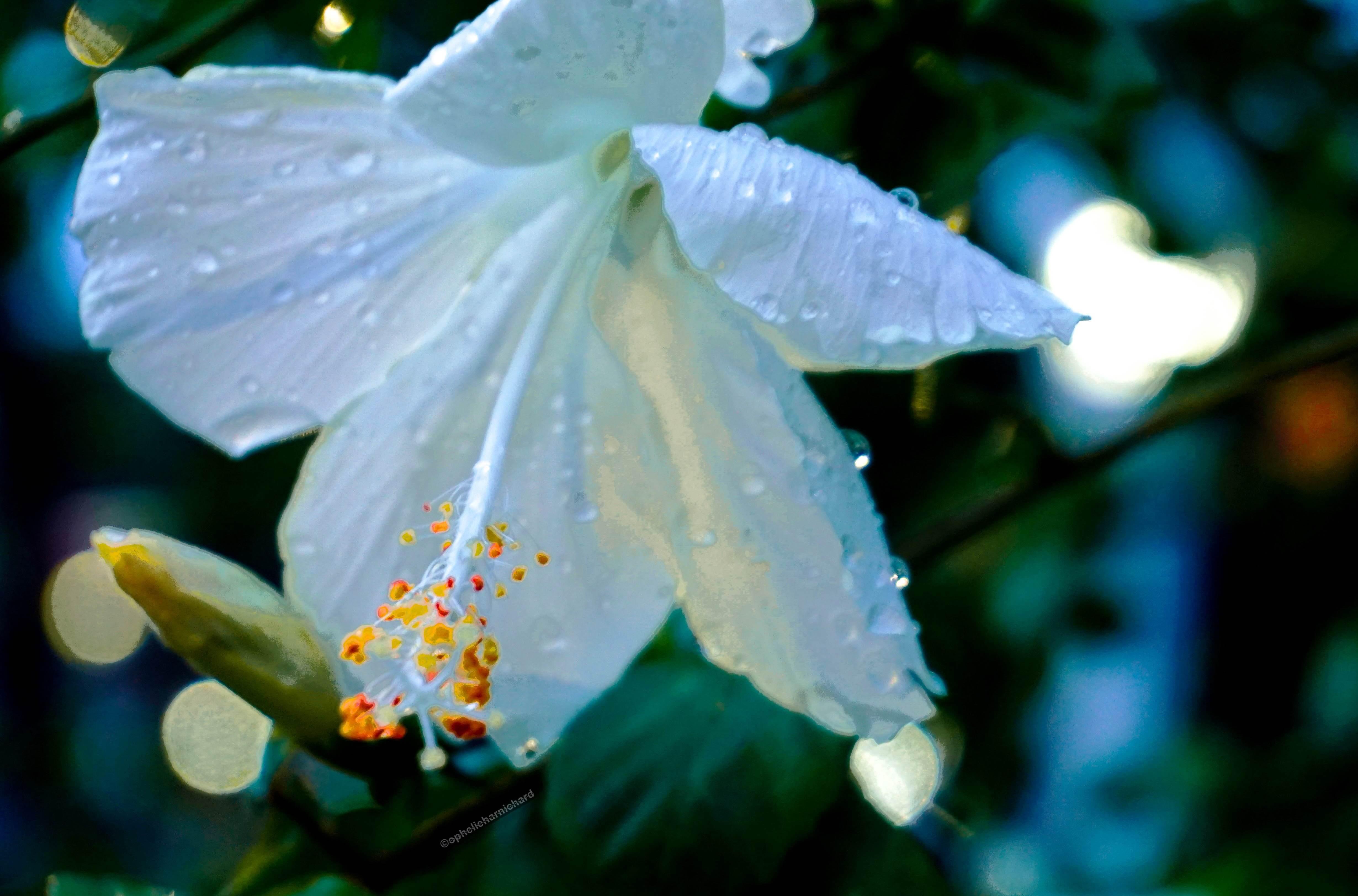 Travel-photography-gallery-closeup-flower-lights-blur-Cambodia