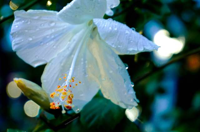 Travel-photography-gallery-closeup-flower-lights-blur-Cambodia