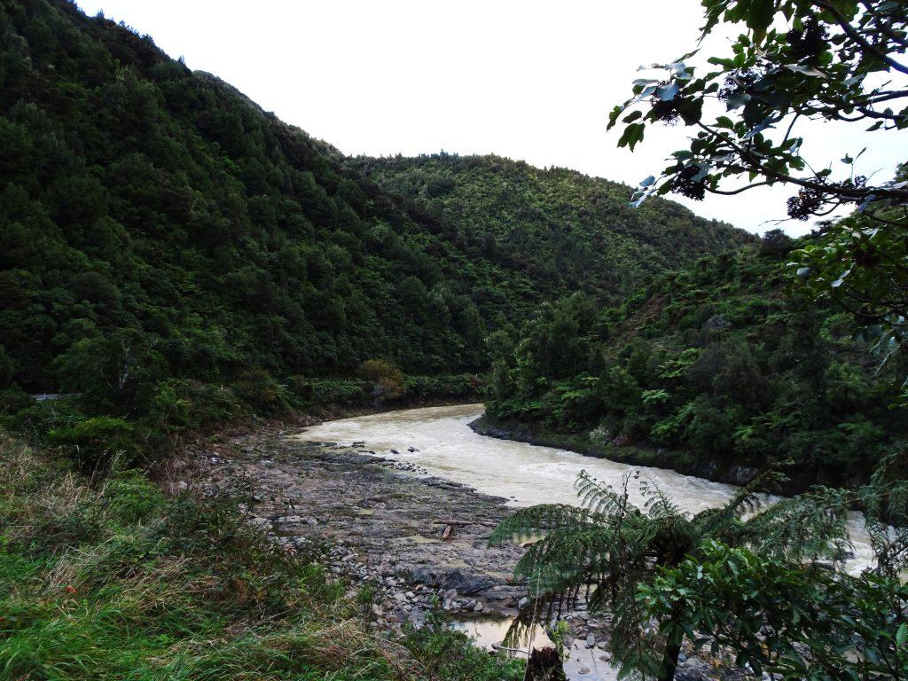 Rainforest West Coast North Island