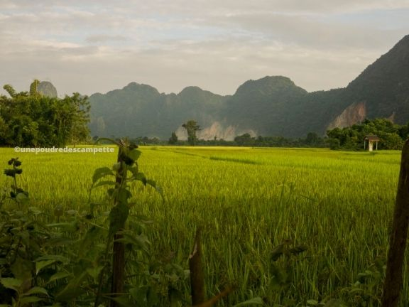 Rice fields Vang Vieng - Unepoudredescampette.com