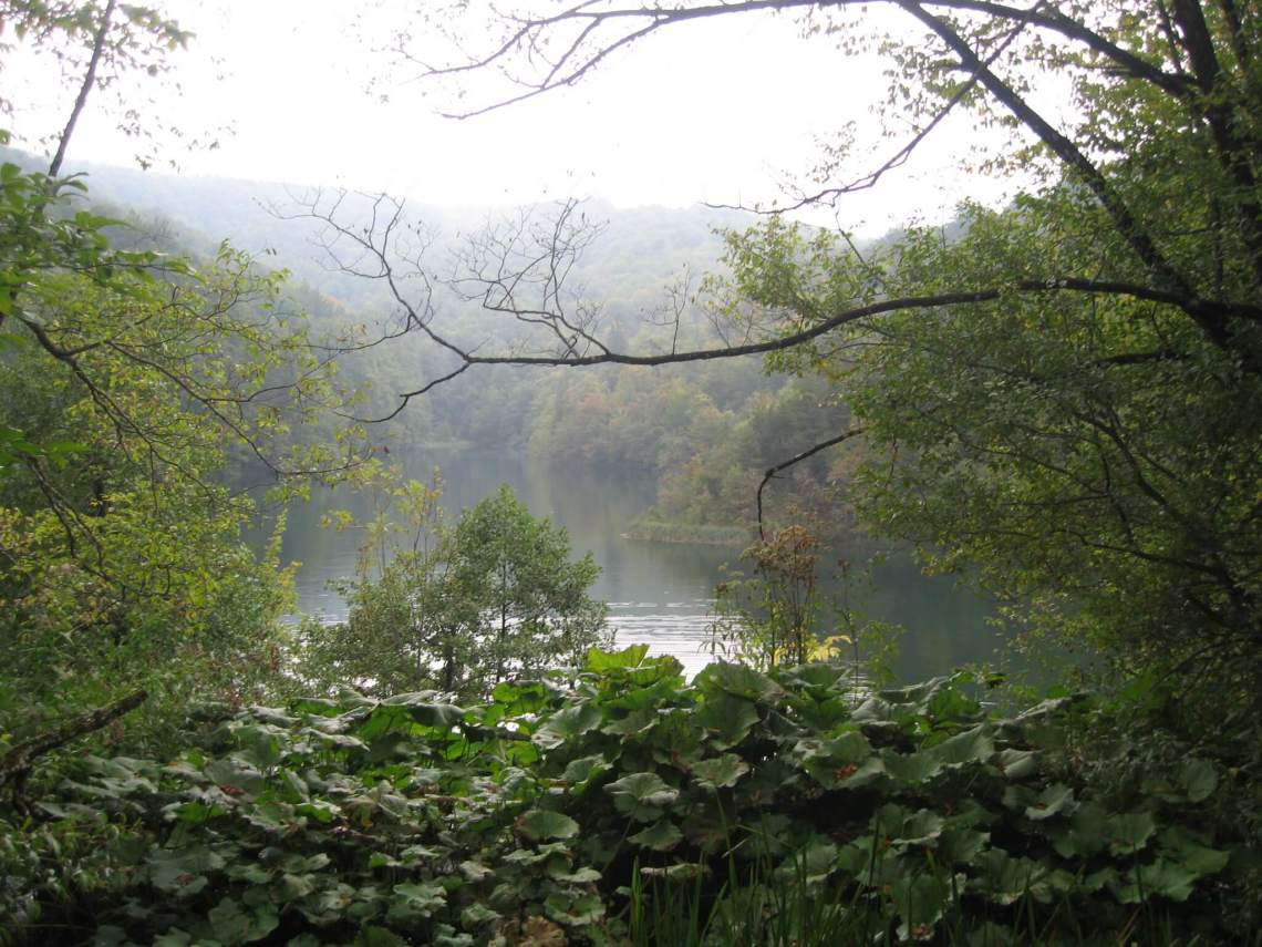 Meer in Plitvice omringd door wilderig groen