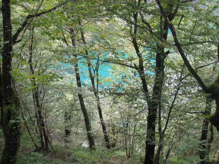 Zicht op groenblauw meer door de bomen van Plitvice