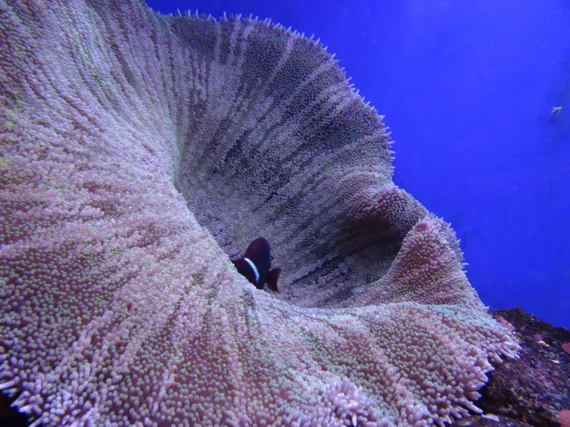 Groot koraal las een bloem met zwarte vis in het binnenste