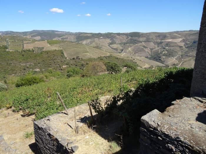 uitgehakte terrassen met druivenstruiken in de rotsen van Alto Douro