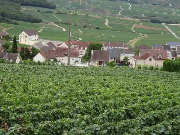 De wijngaarden rond Hautvillers