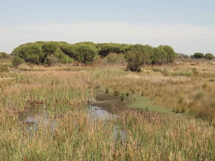 Grasland, cluster bomen en ondiepe poel in natuurpark Doñana