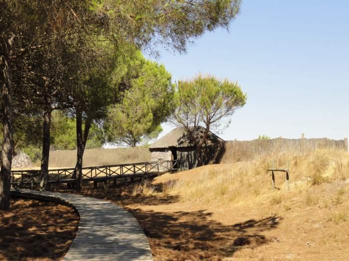 Houten vlonders leiden naar schuilhut in natuurpark Doñana
