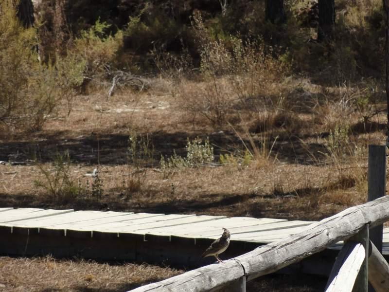 vogel in natuurpark Doñana