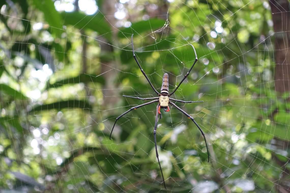 Geel zwarte spin ter grootte van je hand in zijn web