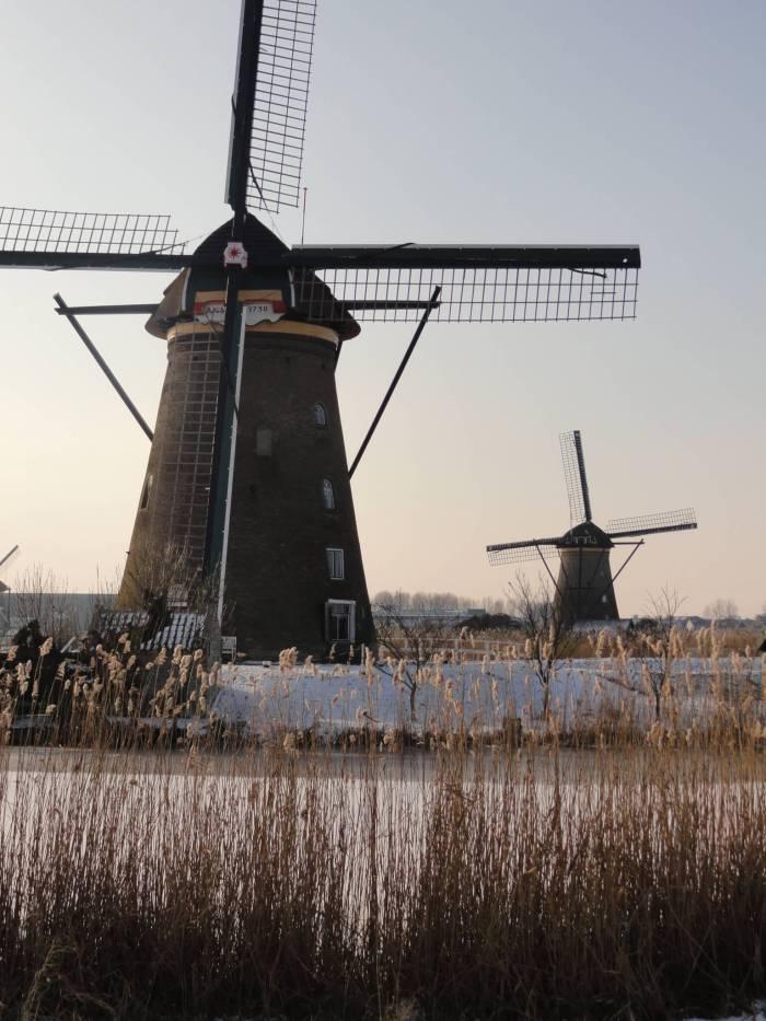 Rietkragen en molens in Kinderdijk. Op een van de twee molens staat het bordje anno 1738, het bouwjaar van de molens