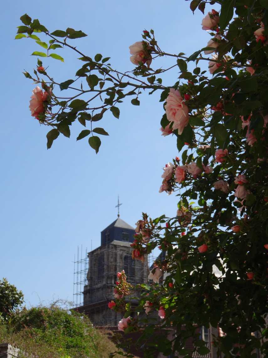 Torenspits Begijnhofkerk Mechelen met roze roos