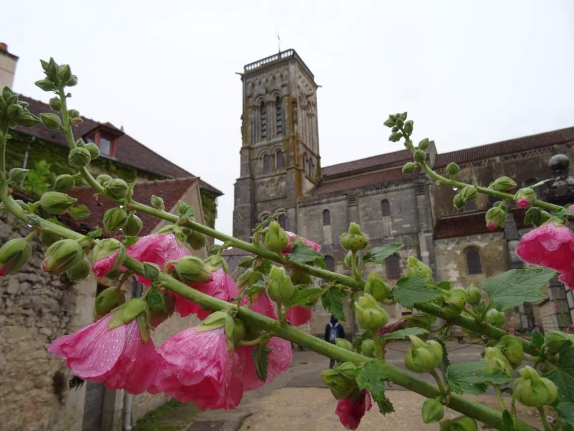 Roze bloemen met basiliek van Vézelay op de achtergrond