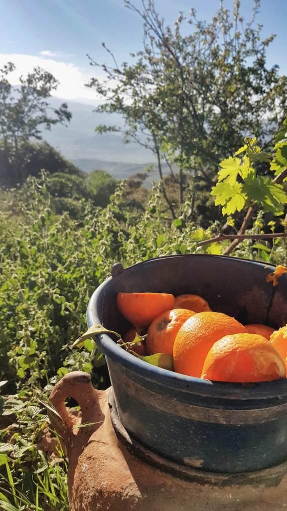sommet-naturel-chefchaouen-maroc-oranges