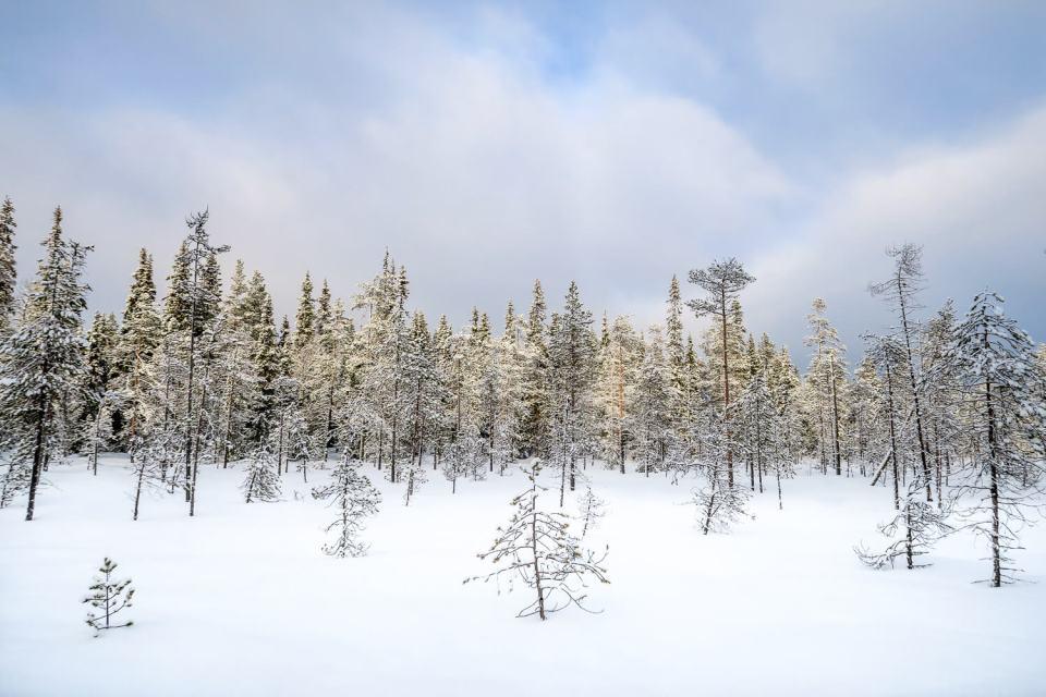 Rayon de soleil sur la forêt du parc national d'Oulanka, Laponie Finlandaise