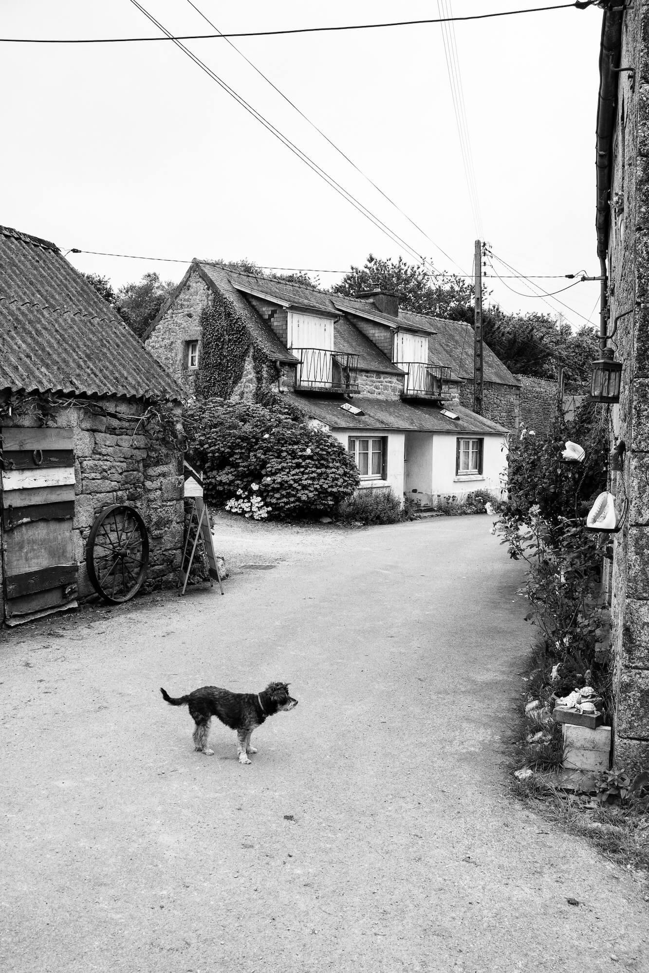 Petit chien au milieu de la rue du hameau de Kérampeulven