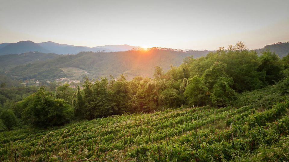 Culture de la vigne et agritourisme au domaine de Cerrolungo, Cinque Terre