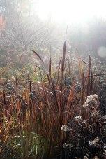 IMG_7385-arboretum-allegee