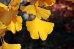 IMG_7402-arboretum-allegee