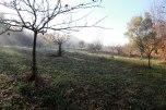 IMG_7409-arboretum-allégée
