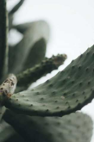 tenerife spain plant