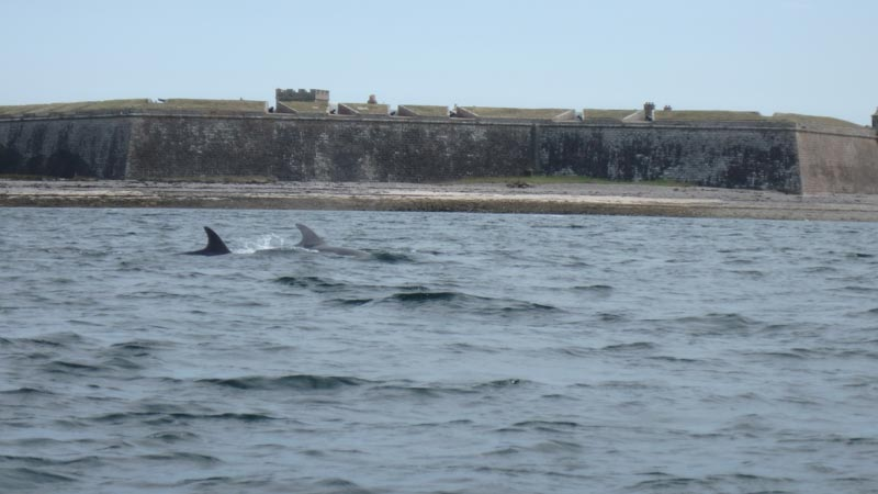 Dolphin Fort George