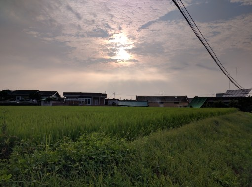 Small town rice field