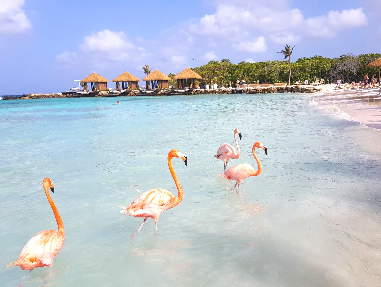 Tips for visiting Flamingo beach Aruba