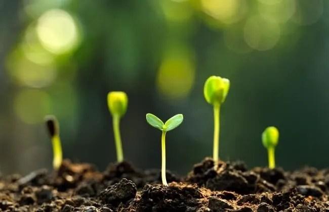 I semi ed il test fai da te sulla germinazione.