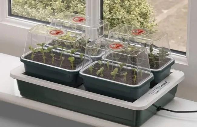 Semina. Le condizioni ideali per la germinazione.
