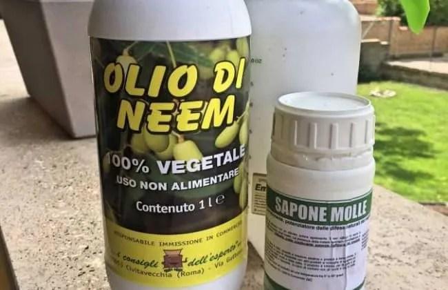 Olio di Neem e sapone molle, come usarli insieme. Insetticida naturale.